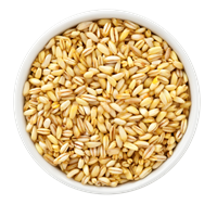 Ground Barley
