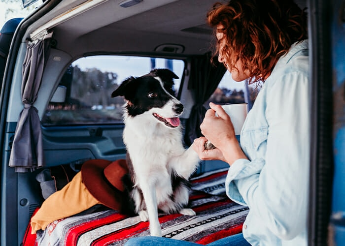 Training Tips for Road Tripping With Your Dog