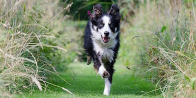 Too Busy to Train Your Dog? Here Are 4 Ways to Fit It In!