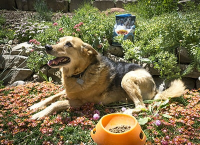 How (and Why!) to Properly Transition Your Dog to New Food