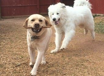 3 Ways to Have Success at the Dog Park
