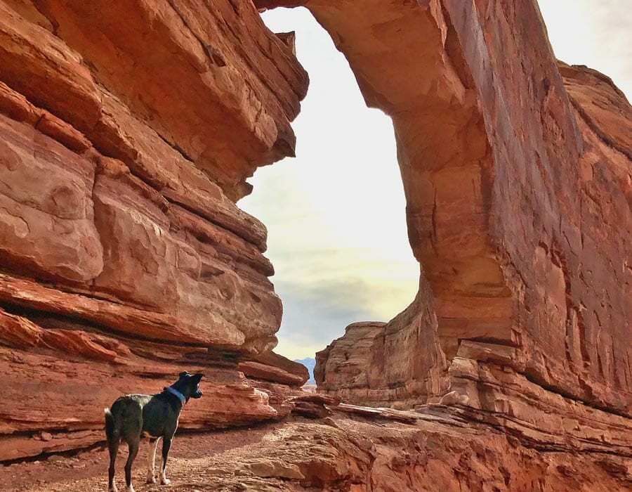 Zia at Jeep Arch, Utah; photo by Jeff Golden