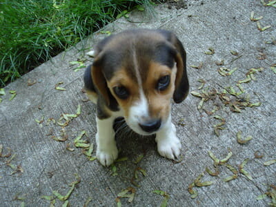 5 Steps to Giving Your New Puppy the Right Start