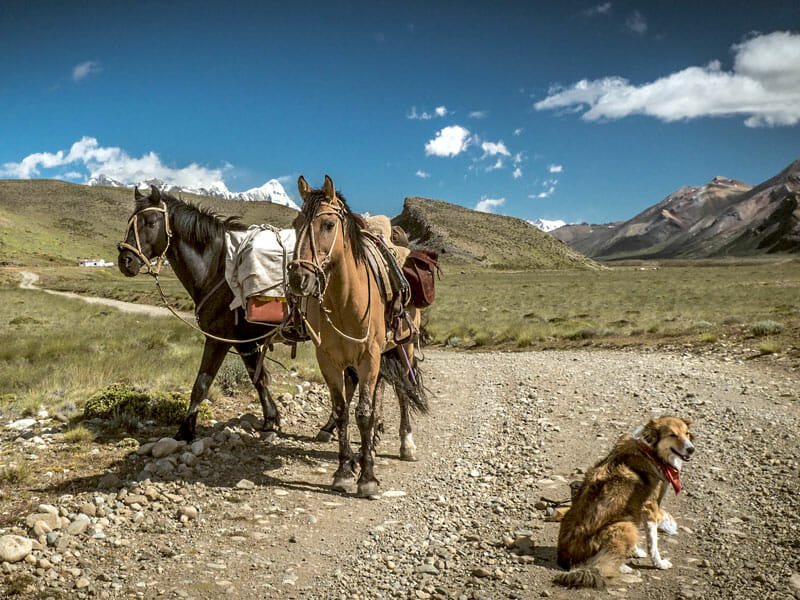 Darcie, Sundance and Bandido; photo by Stevie Anna Plummer