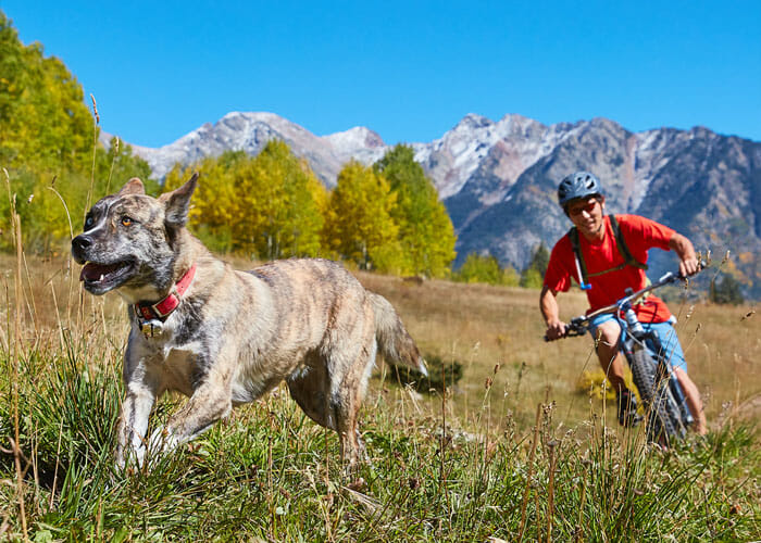 Helping Your Dog Become a Perfect Outdoor Companion