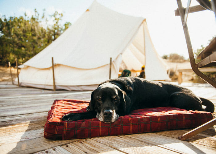 Tails from the Trail: Late-Season Camping at Songdog Ranch, California