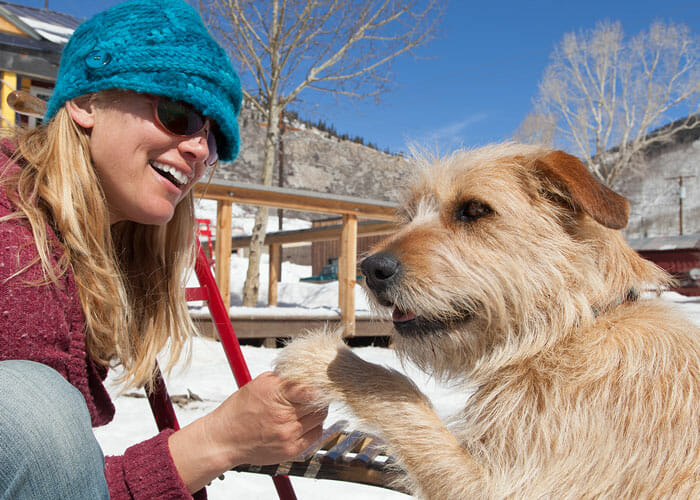 7 Tips for Adopting a Dog During the Holidays
