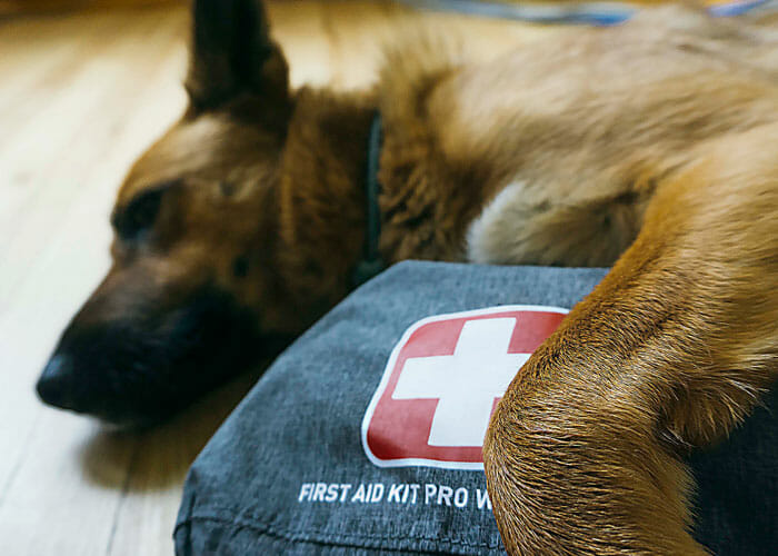 It's an Emergency! What to Pack in an Evacuation Kit for Your Dog