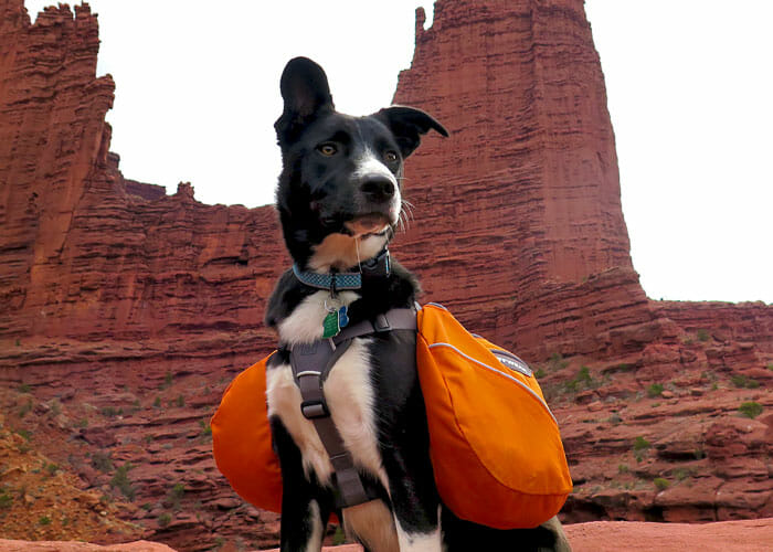 7 Dog-Friendly Desert Hikes in Southeast Utah