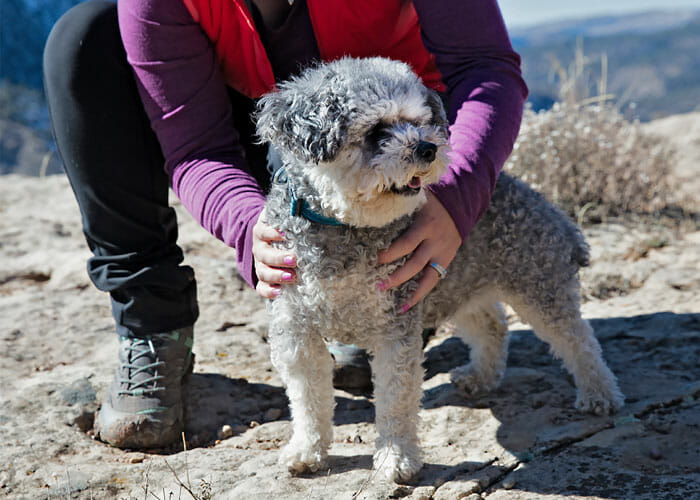 Fabulously Fit? How to Tell if Your Dog is a Good Weight