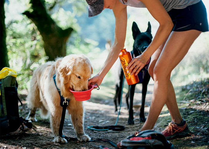 Hot Dogs: Heat Exhaustion and Heat Stroke in Dogs