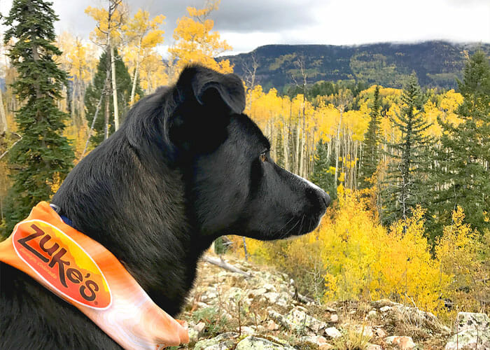 Zuke's Pack Picks: 5 of Our Favorite Dog-Friendly Autumn Adventures