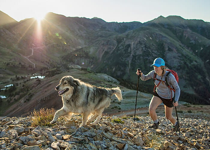 First Aid on the Trail: 3 Common Dog Injuries You Need to Know