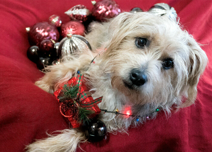 10 Tips to Keep Your Pets Safe During the Holiday Season