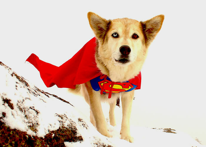 """7 Ways to Have """"Howl-o-ween"""" Adventures With Your Dog"""
