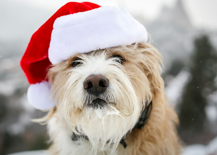 Keep Your Dog on the Nice List! 8 Easy Solutions for Holiday Challenges