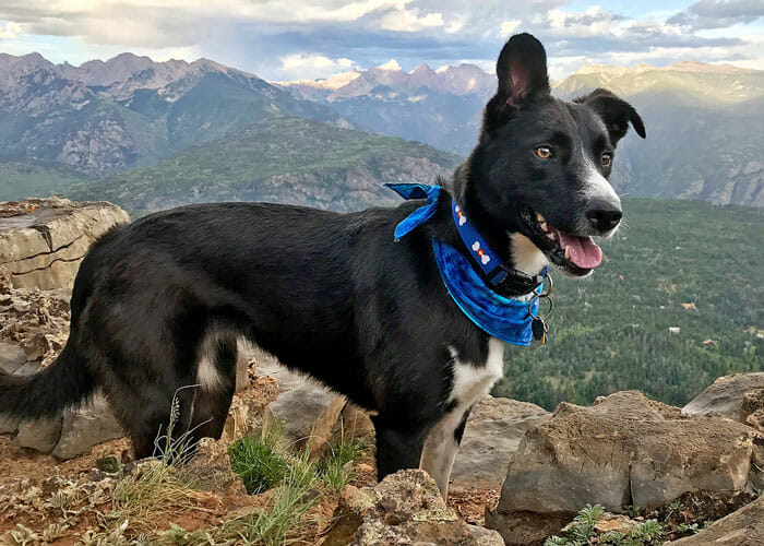 7 Ways to Hike With Your Dog Off Leash (And Not Be a Jerk)