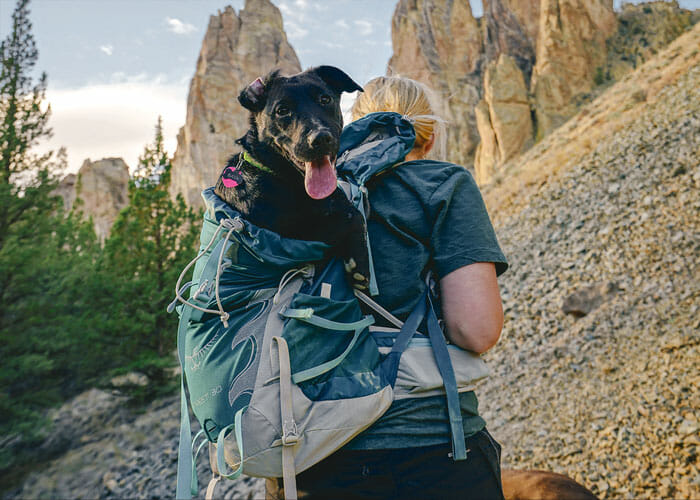 Packing Essentials for Outdoor Adventures With Your Dog