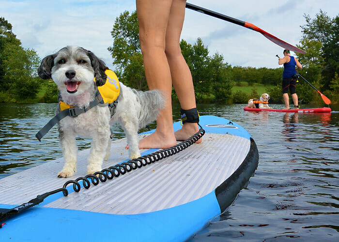 How to Share Paddleboarding Adventures With Your Pup