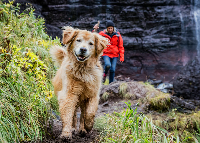 Trail Etiquette 101: Training Tips for Off-Leash Adventures With Your Dog