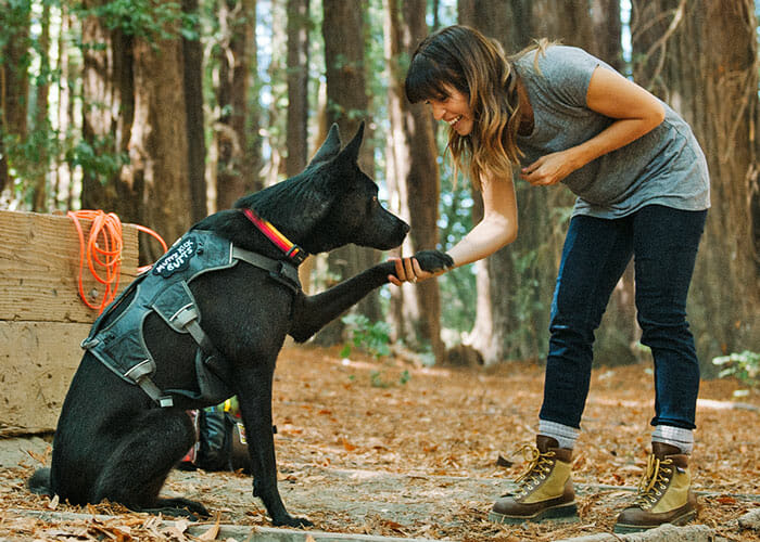 How to be a Trainer, Not a Tester: Finding More Success in Puppy Training
