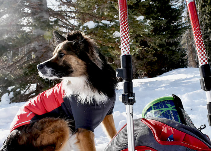 8 Tips for Winter Hiking with Your Dog