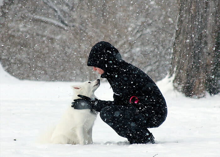Winter Weather Safety Tips for Your Pup