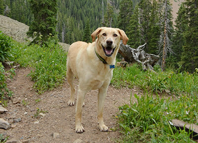Must-Have Gear for Hiking With Your Dog