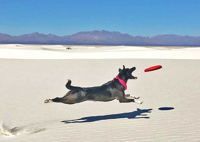 Performance Nutrition for Your Adventure Dog
