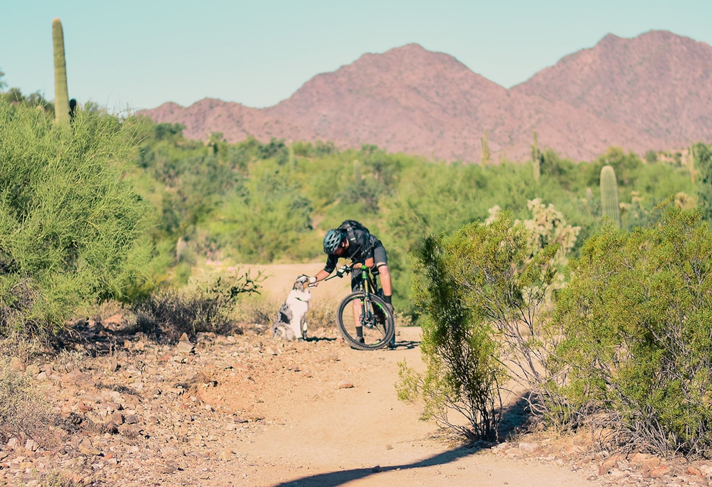 Quick Guide: Mountain Bike Dog